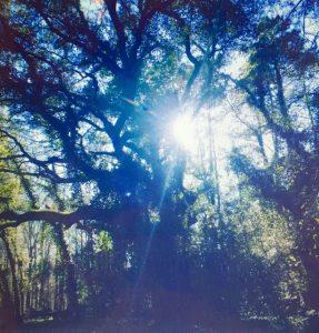 Magic Ivy Tree
